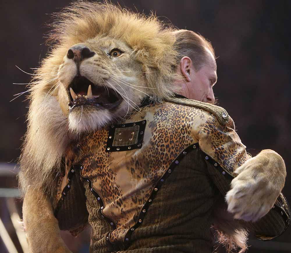 Lion_20130516_1.jpg